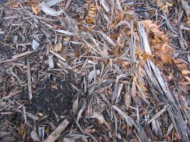 sci-text - WOOD chips by sci-fi-stock