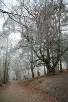 Stock : Winter Woodland Path 2 by Ange1ica-Stock