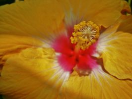 The colors of paradise by Midnyt-Moonlight