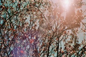 Japanese Tree in the Sun by zeldalilly