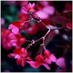 Colour Of Life VII by GreenEyedHarpy