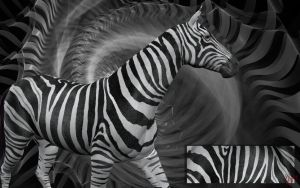 Zebra by GypsyH