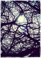.life is a tangled web. by GrotesqueDarling13