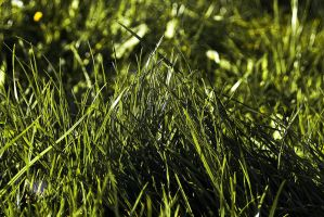 .:.Grass.:. by Ailedda