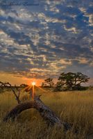 Stumped by a Kalahari sunrise by MorkelErasmus