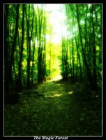 The Magic Forest II by MikeleSVK
