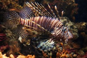 Striped tropical fish by steppeland