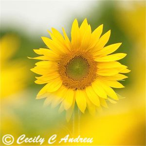 You Are My Only Sunshine by CecilyAndreuArtwork