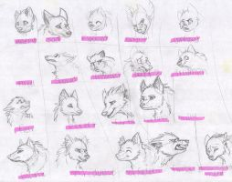 wolf exprtession sheet 1 by aacrell