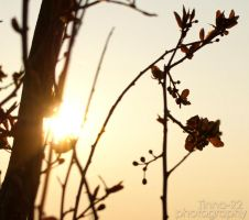 Sunset in early spring by Tinna-92