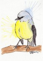 Yellow Breasted Robin by IckyDog