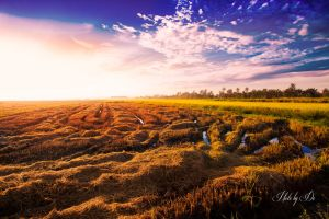 Paddy Field by demanlai