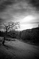 Winter day by mutrus