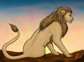 Lion in the morning sun by Kiruel