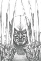 Wolverine Sketch by caiocacau