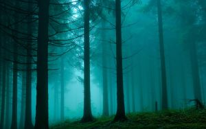 FOREST  12 by P7IZA