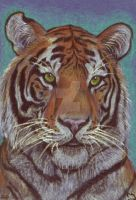 Aceo Tiger by Fjallira