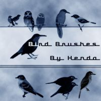 Bird brushes by Henda-Stock