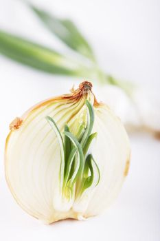 onion by tfprince