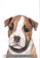 Staffordshire terrier puppy by IviiK