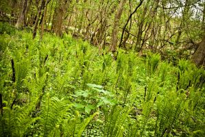 Where the Ferns Grow by Valentine-Photo