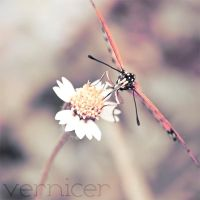 secret within by verniceR