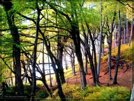 The Golden Forest II by l8