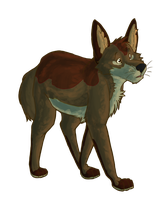 Coyote by SikiSpots