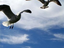 Seagulls....ATTACK by M0D3S7M1K3
