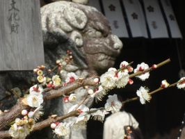 Lion and Plum Blossoms by Ekuboryu