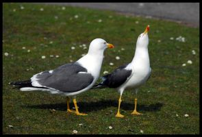 Seagulls by St0DaD