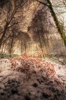 The Burnished Bush by taffmeister