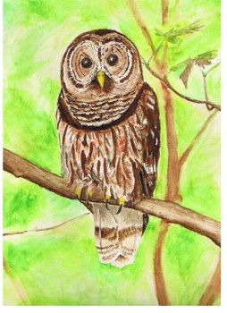 Mr. Owl by offbeat-by-3