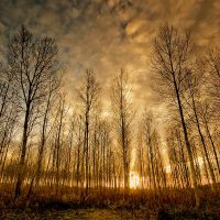 Shadows and Tall Trees by Dave-Ellis