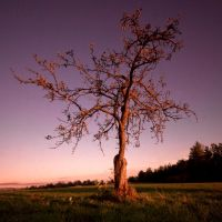 Old Tree by IraMustyPhotography