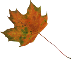 maple leaf 2 orange and green precut png by Nexu4