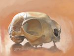 Ambient Cat Skull [3DS] by Twarda8