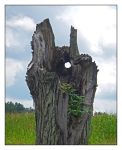 Spirit tree.DSCN2265, with story by harrietsfriend
