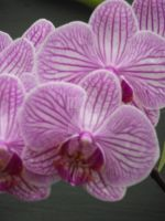 Orchids II by njbartworks