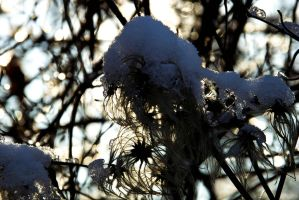 Winter Plant Thing by stupidduck