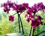 Birthday Orchids and Window View for Lorene by SrTw