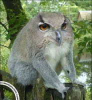 The short necked owlemur by HumanDescent