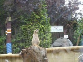 Colchester Zoo photos 9 by pan77155