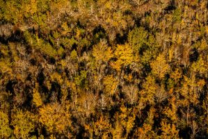 Automne by VicDeS-P