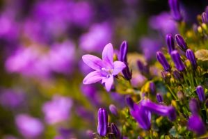 Spring Has Sprung by cupplesey