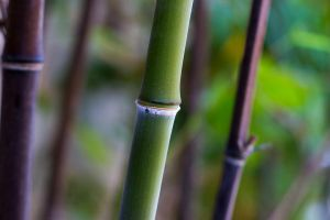 BAMboo by Grimalur