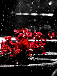 Raining Red -edited- by IoannisCleary
