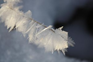 Delicate Frost Feathers by KeswickPinhead