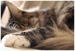 Afternoon Snooze II by fetishfaerie-photos
