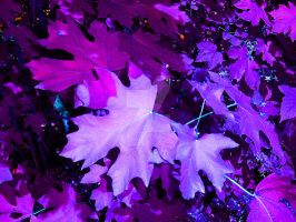 Purple Maple by SparkleKinsey
